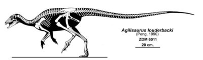 Autor: Jaime A. Headden<br />http://qilong.wordpress.com/2010/07/09/leaellynasaura-and-caudal-length-in-ornithischians/